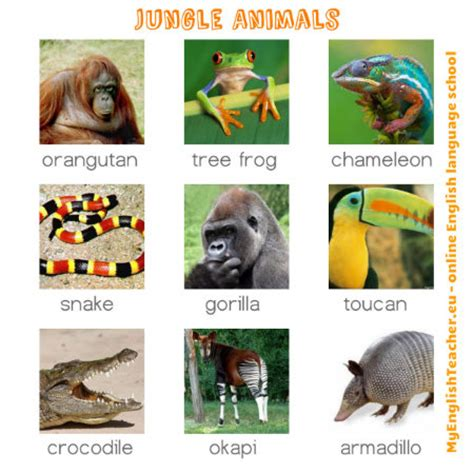 let s learn about jungle animals letã s learn about animals books vocabulary with pictures 13 pictures to improve