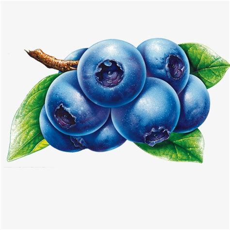blueberry clipart blueberry fruit png image and clipart for free