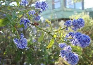 blue naturally beautiful