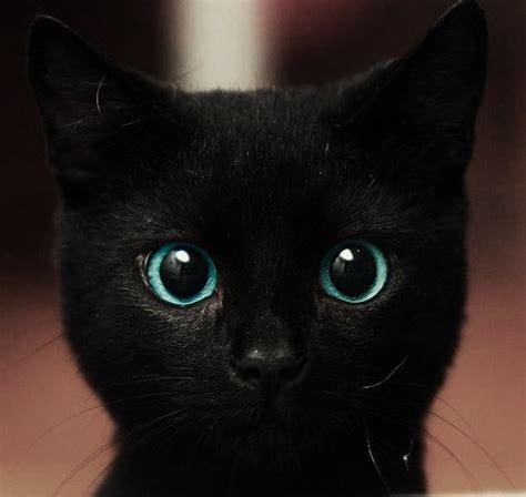 Sweet Black Cat by Black Cat Sweet Image 361017 On Favim