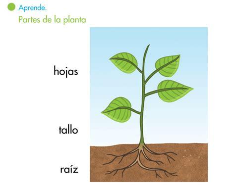 olguchiland las plantas ii el blog de segundo las plantas ii