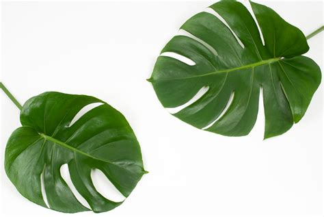 Throw Pillows how to make bright tropical leaf throw pillows with cricut