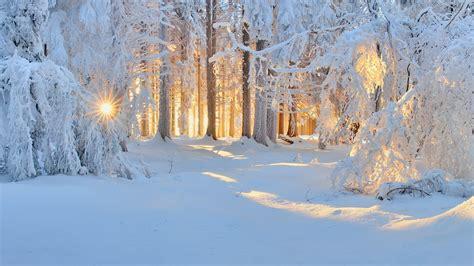 sunrise winter nature forest snow landscape trees