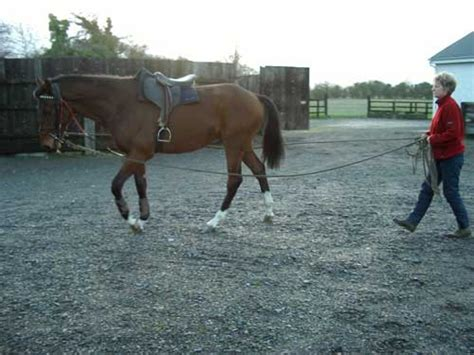 All Weather Surfaces For Horses swordlestown stud for breaking horses a lunge ring an all weather arena as well as a