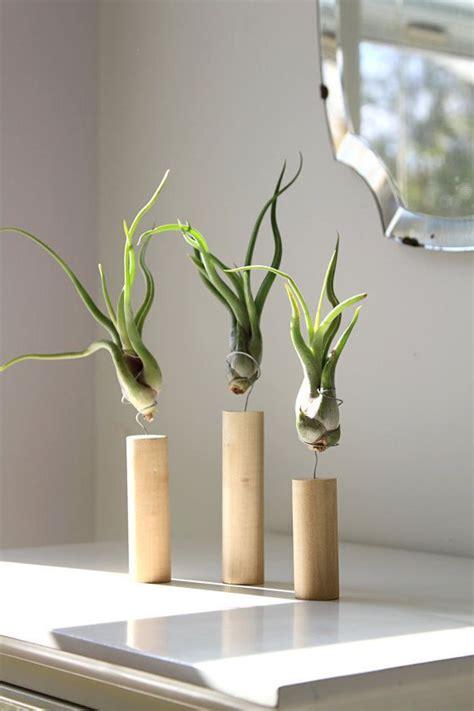 unique indoor plants unique air plant decor live air plants cork magnet house
