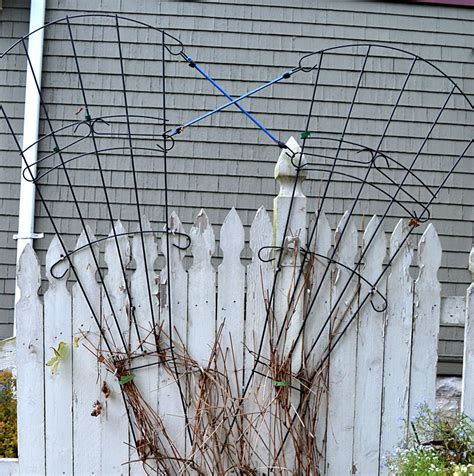 Shaped Garden Trellis No Nails Needed To Make Shaped Trellis Buffalo