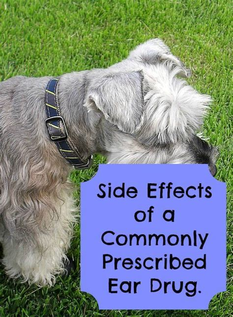 otomax for dogs side effects of otomax for dogs paws right here