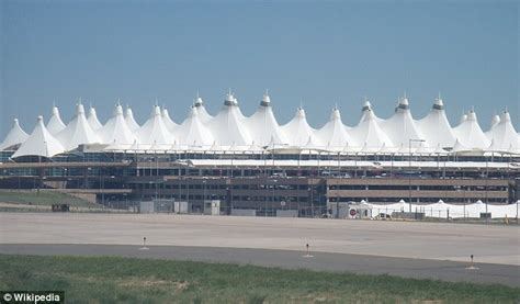 haircut denver international airport hopping mad hundreds of wild rabbits have descended on