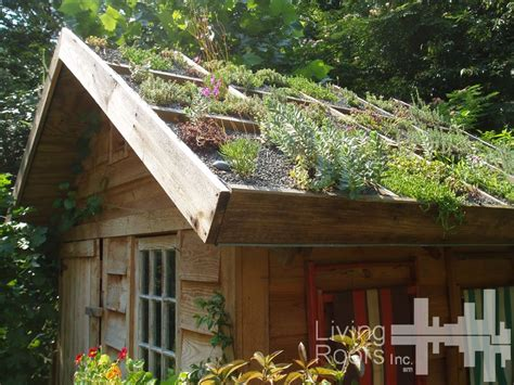 Garden Shed Roof by Diy Green Roof Shelter Install At A Residence In Raleigh