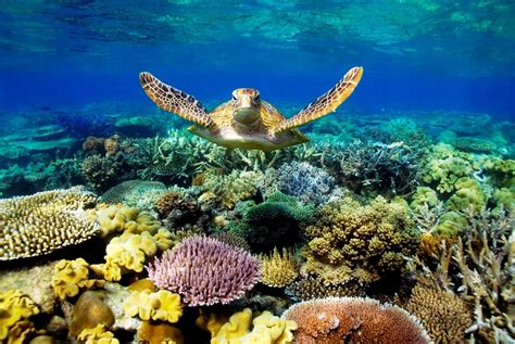 How To Save A Dying Plant by Explore The Natural Beauty Of The Great Barrier Reef