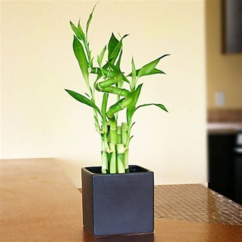 plants that do not need sunlight the darling life indoor plants that do not require
