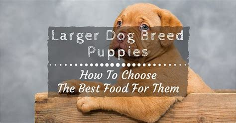 how to choose a breed how to choose the best large breed puppy food for your
