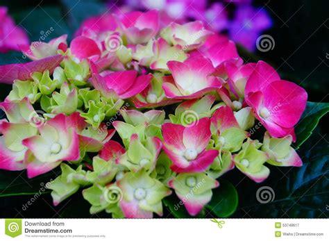 gardenia flower delivery lily flower garden flower shop sale flower petals