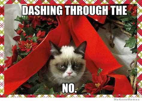 Angry Cat Meme No - 10 best grumpy cat christmas memes weknowmemes