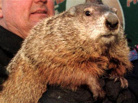 groundhog day kills himself bad ideas peta wants punxsutawney phil replaced by