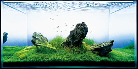 takashi amano aquascaping nature aquarium photographs amanotakashi net