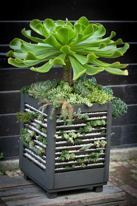 47 Succulent Planting Ideas With Tutorials Succulent Succulent Planter Ideas