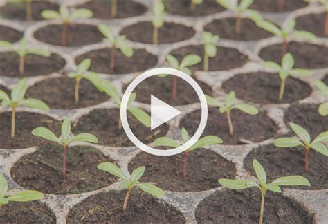 how to start plants from seeds at the home depot