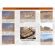 Ruta De Las Huellas F&243siles Monsagro El Proceso Fosilizaci&243n