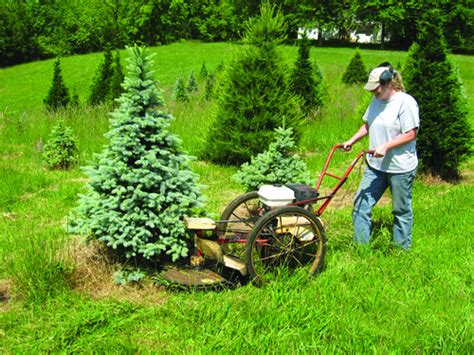 powell river project growing christmas trees on