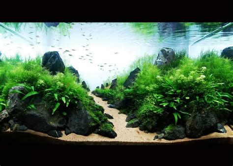 Aquascape Gallery by Aquarium Aquascapes Photo