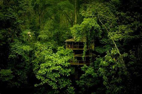 treehouse community finca bellavista treehouse community costa rica
