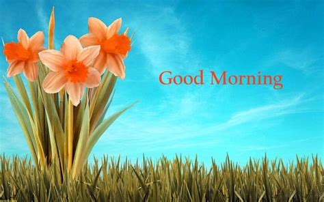 wallpaper flower morning 157 good morning flowers images photos pics hd download here