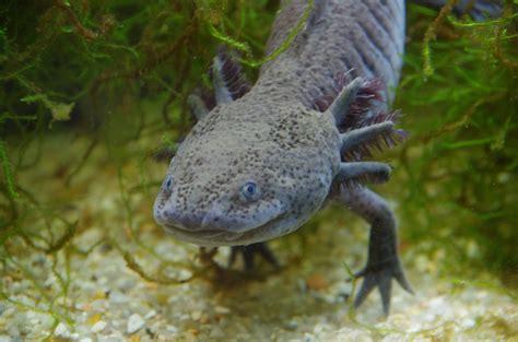 imagenes de animales de mexico 10 animales que debes conocer en m 233 xico