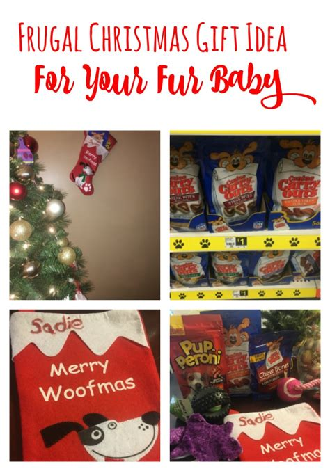 frugal christmas gift idea for your fur baby frugal