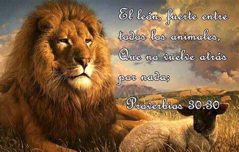 imagenes de leones con frases cristianas el le 243 n fuerte entre todos los animales que no vuelve