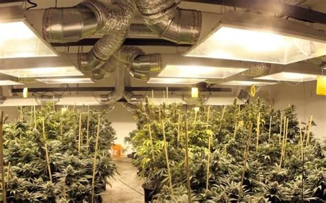 Grow Room by The 21 Best Growroom Tips And Tricks From Pros High