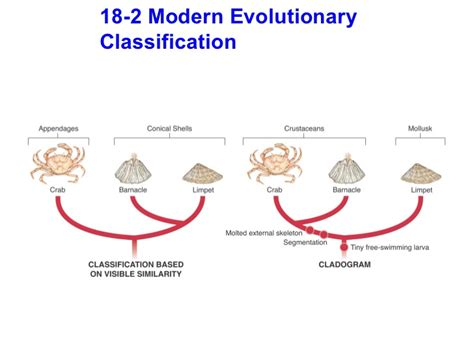 Section 18 2 Modern Evolutionary Classification Worksheet