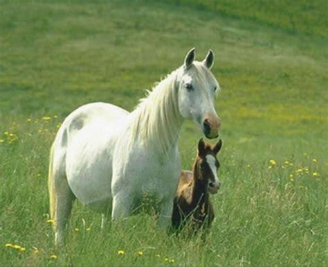 trilogia della frontiera cavalli nuova frontiera nell abbandono animali i cavalli a va p a onlus protezione animali vda