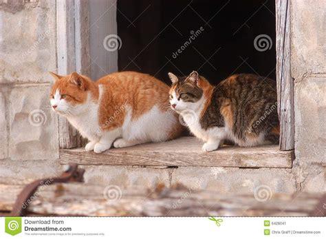 cats  barn window stock image image