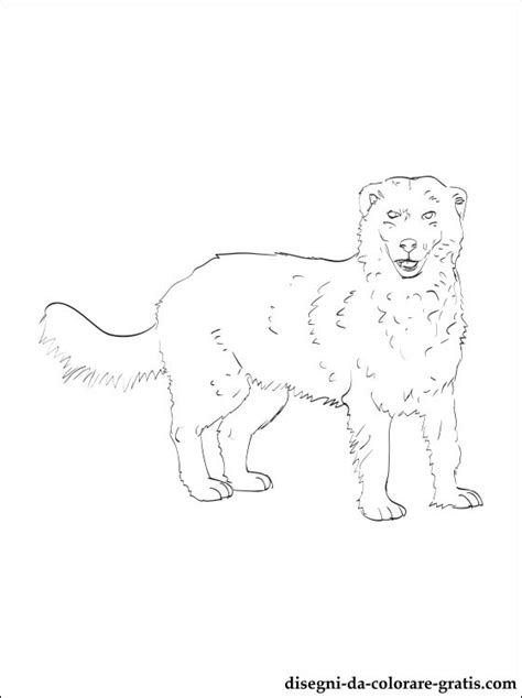 coloring pages of sheep dogs disegno di da pastore maremmano abruzzese da colorare