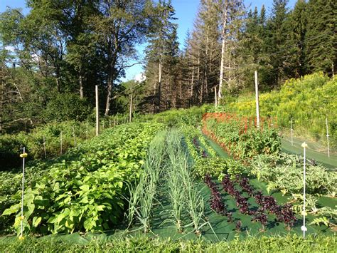 Vegetable Garden Weeds Enter Now To Win 150 Worth Of Products Garden Mats