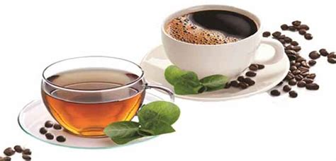 hydration tea health and hydration the benefits of green tea