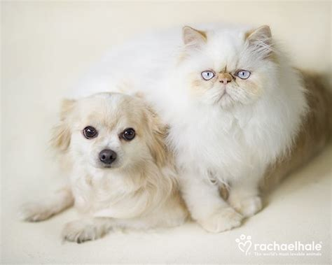 1376245361 edith templeton or a little 479 best cute animals images on pinterest fluffy pets