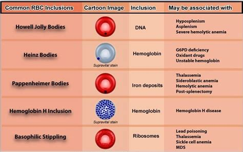 different reds variations in red blood cell morphology size shape