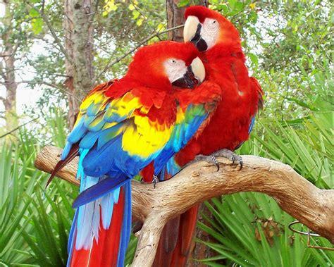 colorful macaw wallpaper parrot computer wallpapers desktop backgrounds