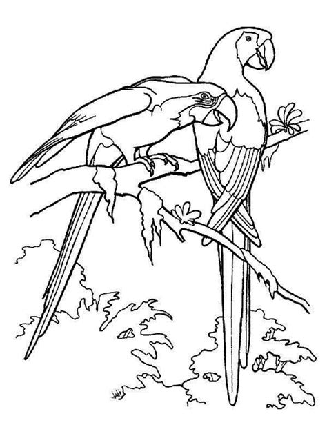 coloring pages of birds in the rainforest paroots coloring pages print coloring home