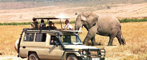 african safari car tanzania safari tours