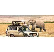 Tanzania Safari Tours Specialists  Expeditions