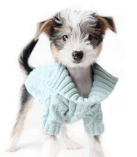 puppies in clothes best 25 sweaters ideas only on clothes pet clothes and coats