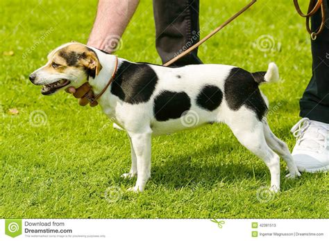 spotted dogs spotted stock photo image 42381513