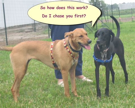 how to talk to dogs talking to about food pictures to pin on pinsdaddy