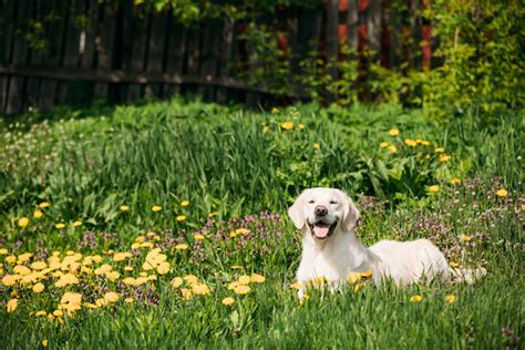 why do dogs hump their bed dog trancing what is it and why does your dog do it