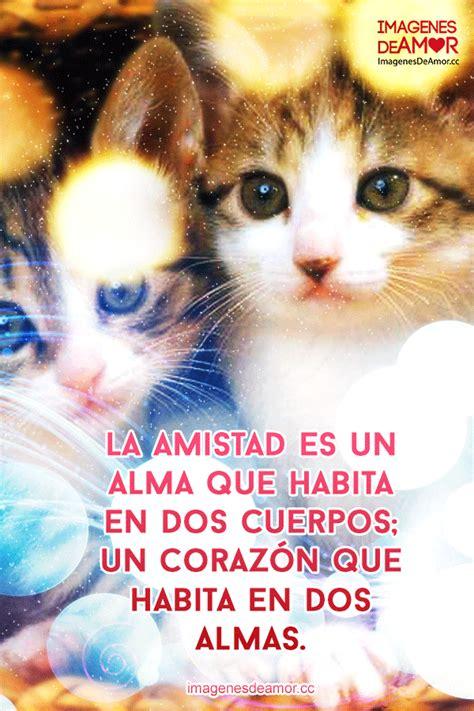 imagenes de amor con gatos imagenes de amor y amistad perros con gatos holidays oo