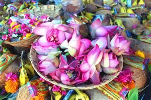 Hindu Lotus Flower File Indian Lotus Flowers Jpg Wikimedia Commons