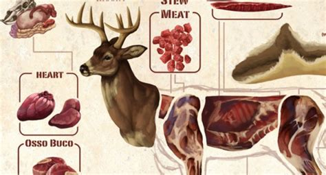 Kitchen Knives Guide know your wild game cuts with this illustrated deer meat